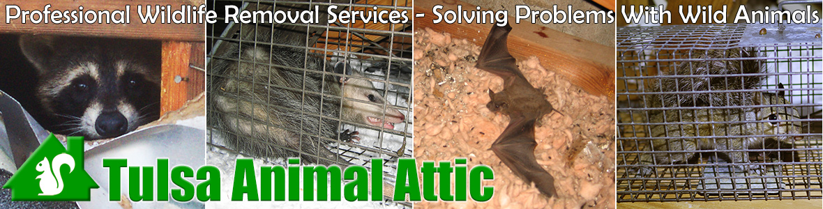 Tulsa Animal Attic
